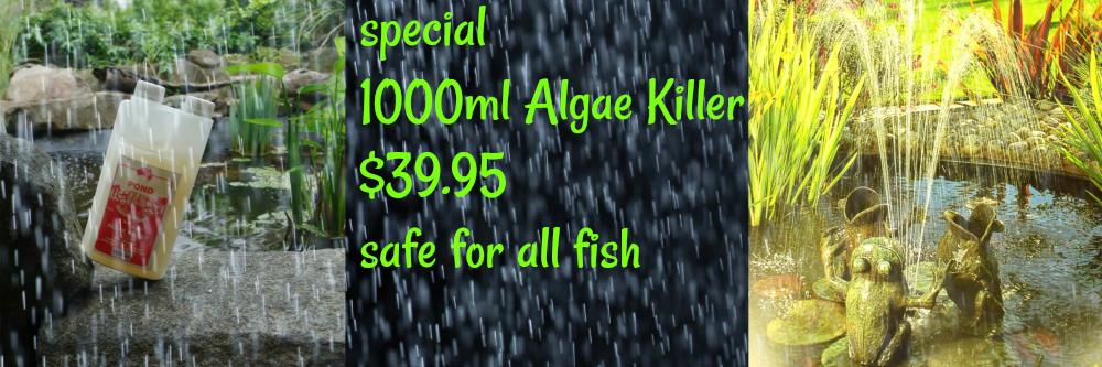 14-sept-banner-algae-killer-new.png