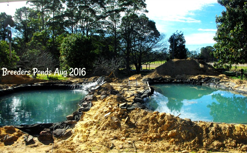 31-dec-breeders-ponds-aug-2016.jpg