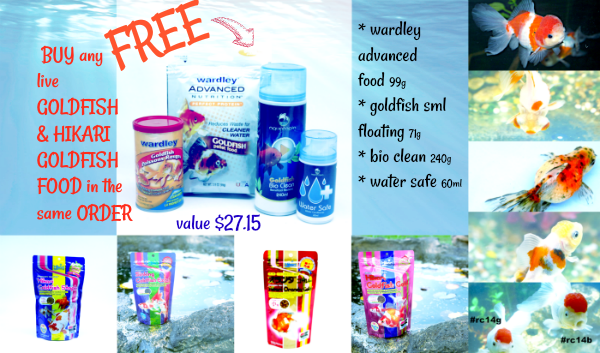 banner-for-top-of-pages-hikari-goldfish-free-offer.png